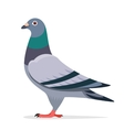 Pigeon character vector image