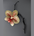 tropical black red and gold orchid flower on dark vector image