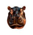 hippopotamus head portrait from a splash of vector image vector image