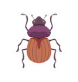 beetle bug insect species top view flat vector image vector image