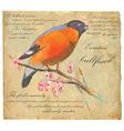 Eurasian Bullfinch - An hand painted