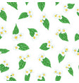 semless pattern branch flower jasmine with green vector image