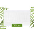 transparent window with border green palm leaves vector image