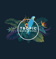tropical background with frame 6 vector image