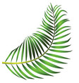 green leaf of palm tree isolated on white vector image vector image