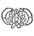 herati design originated in the old city of herat vector image vector image