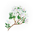 rhododendron branch flowers multicolored vector image vector image
