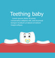 teething baby banner with tooth vector image vector image