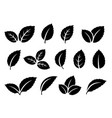 black mint leaves set icons on white vector image