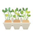 egg box with eggs and young fresh sprouts in them vector image vector image