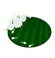 Fresh Jasmine Flowers on Green Banana Leaf vector image vector image