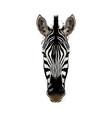 zebra head portrait from a splash watercolor vector image vector image