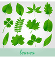 natural green beautiful leaves icon set eps10 vector image