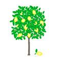 lemon tree vector image