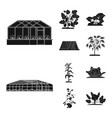 design of greenhouse and plant logo set of vector image