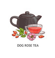 dog rose tea - berry fruit beverage drawing in vector image vector image