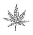 narcotic cannabis leaf engraving vector image