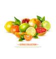 realistic citrus fruit vector image vector image