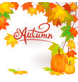 banner pumpkin on a background of yellow an vector image vector image
