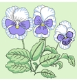 Blue white Pansy vector image vector image