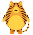 tiger with round body vector image vector image