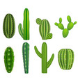 realistic detailed green cactus plants set vector image vector image