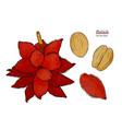 salak fruit hand draw sketch vector image