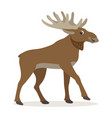 cute forest animal friendly moose with big horns vector image