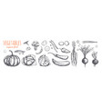vegetable collection hand drawn sketch vector image