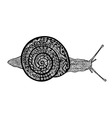 Hand drawn snail on white background vector image