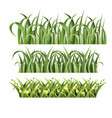 green grass set on white vector image vector image