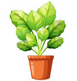 green plant in clay pot vector image vector image