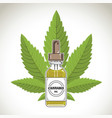 medical marijuana cannabis oil extract in bottle vector image vector image