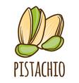 pistachio icon hand drawn style vector image