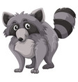 gray raccoon with happy face vector image vector image