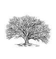 spreading leaveless tree winter oak hand drawn vector image vector image