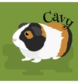 happy pets home animals guinea pig on white vector image