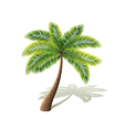 Palm tree isolated on white vector image vector image