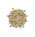 realistic hemp seeds marijuana bunch vector image vector image