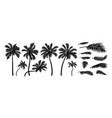 silhouette coconut tree on white background vector image vector image