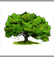 spreading tree oak with green leaves hand drawn vector image vector image