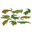 collection of crocodiles predatory amphibian vector image