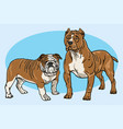 dogs cartoon drawing set bulldog pitbull vector image