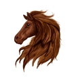 Sketch of brown horse head with arabian stallion vector image vector image
