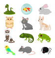 home pets set isolated on vector image