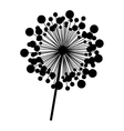 contour dandelion with stem and pistil closeup vector image vector image