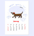 funny dachshund sketch calendar vector image