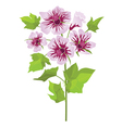 Pink flowers mallow with green leaves vector image vector image