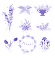purple flowers set with watercolor splashes vector image