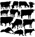 Cow Silhouettes vector image vector image